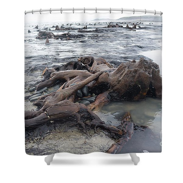 Bronze Age Sunken Forest At Borth On The West Wales Coast Uk Shower Curtain