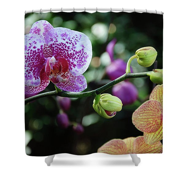 Butterfly Orchid Flowers Shower Curtain