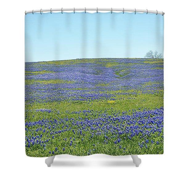 Texas Bluebonnets 12 Shower Curtain