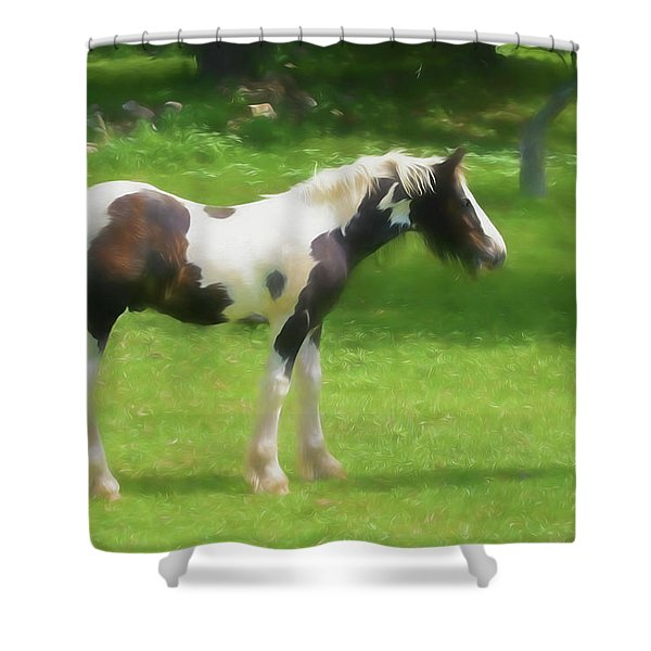 A Beautiful Young Gypsy Vanner Standing In The Pasture Shower Curtain