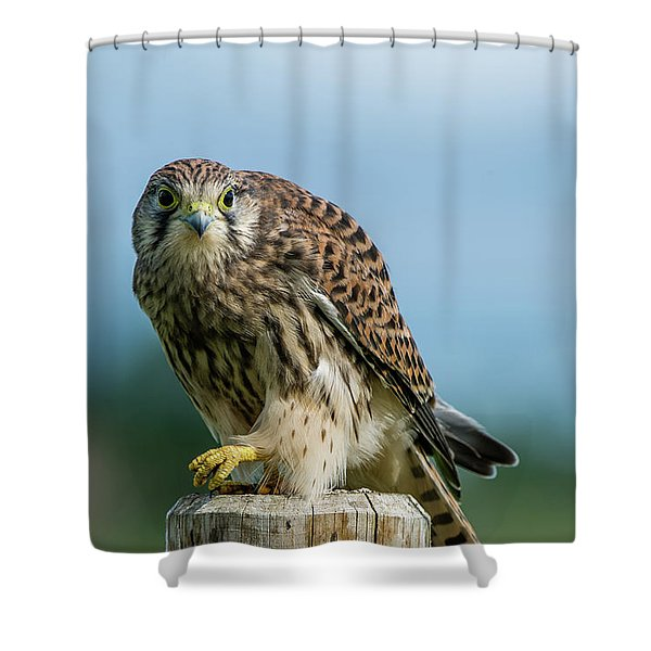 A Beautiful Young Kestrel Looking Behind You Shower Curtain