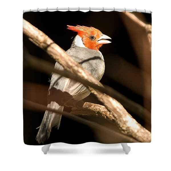 A Bird At The Lincoln Childrens Zoo Shower Curtain