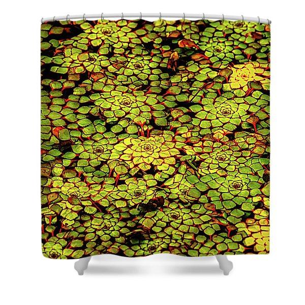 A Botanical Mosaic Shower Curtain