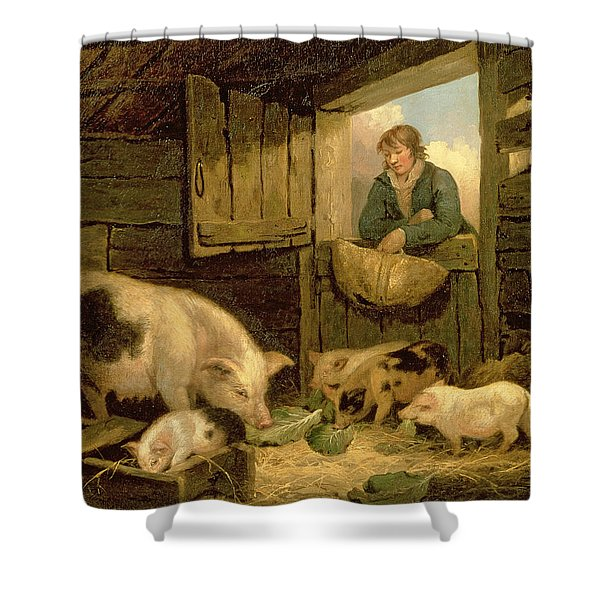 A Boy Looking Into A Pig Sty Shower Curtain