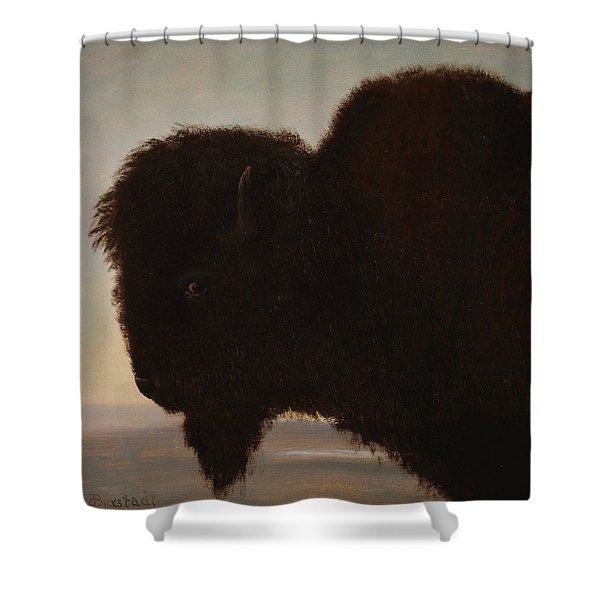 A Bull Buffalo Shower Curtain