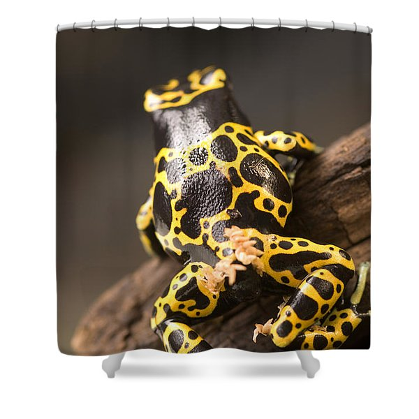 A Bumblebee Or Yellow-backed Poison Shower Curtain