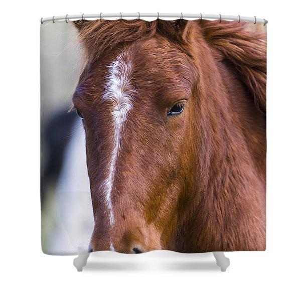 A Chestnut Horse Portrait Shower Curtain