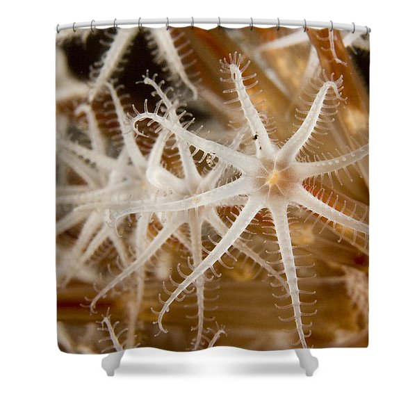 A Closeup View Of Coral Polyps Shower Curtain