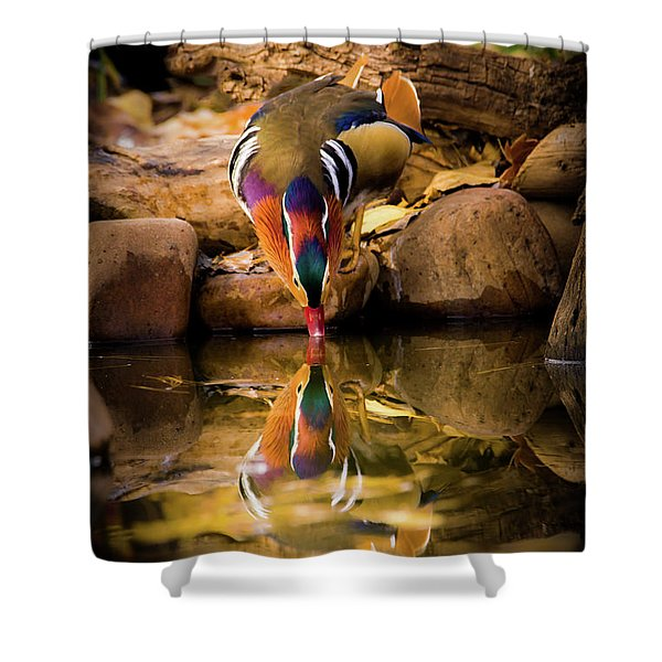 A Cold Drink - Mandarin Drake Shower Curtain