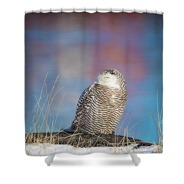 A Colorful Snowy Owl Shower Curtain