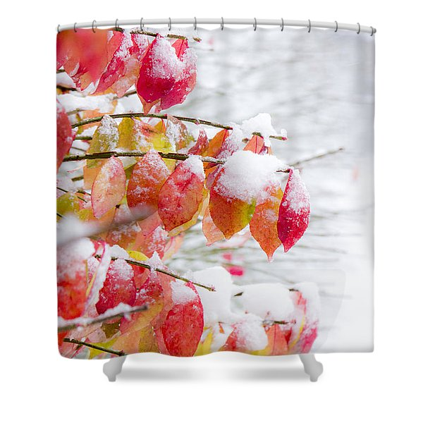 A Colorful Winter Shower Curtain