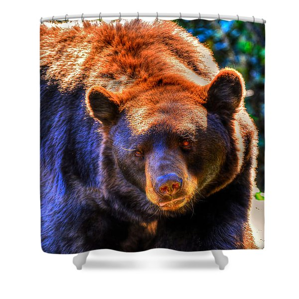 A Curious Black Bear Shower Curtain