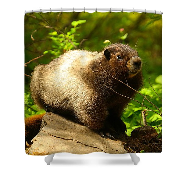 A Curious Marmot Shower Curtain