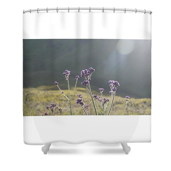 A Day Without Sunshine Is Like, Shower Curtain