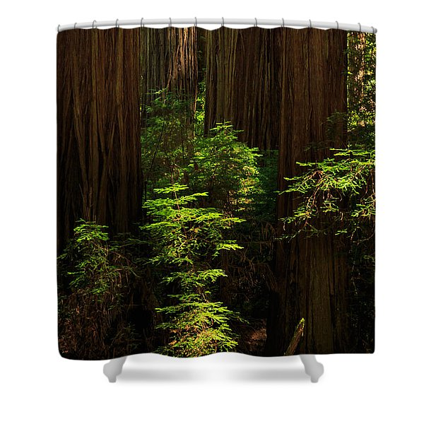 A Deer In The Redwoods Shower Curtain