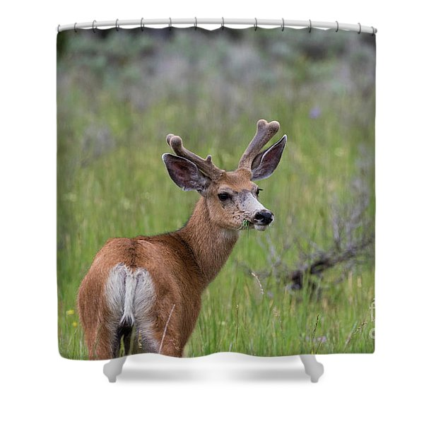 A Deer In Yellowstone National Park  Shower Curtain