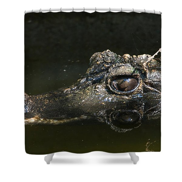 A Dwarf Crocodile At The Lincoln Shower Curtain