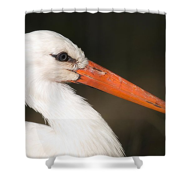 A European White Stork At The Lincoln Shower Curtain