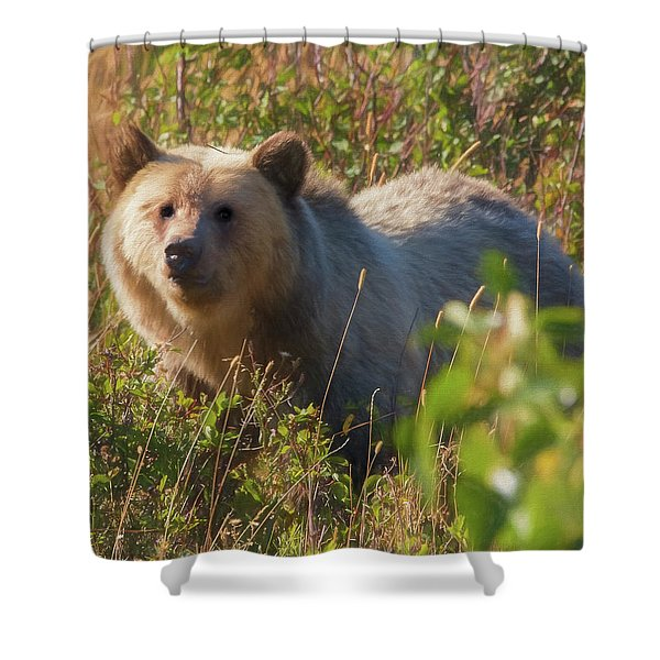 A  Female Grizzly Bear Looking Alertly At The Camera. Shower Curtain