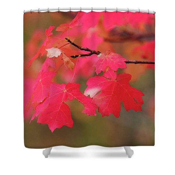 A Flash Of Autumn Shower Curtain