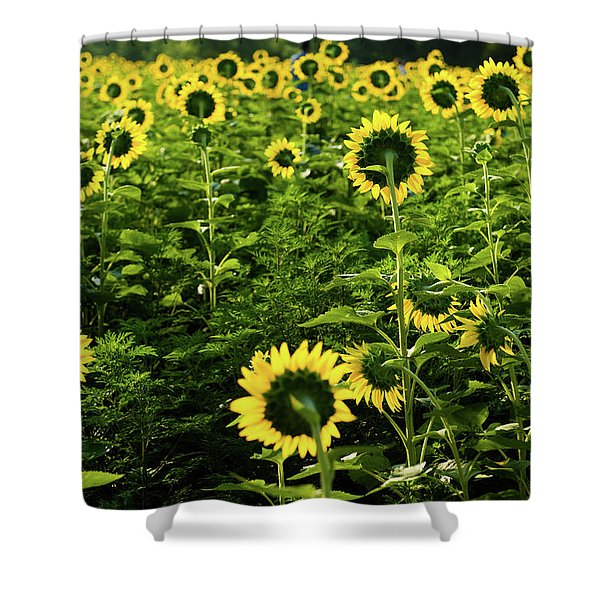 A Flock Of Blooming Sunflowers Shower Curtain