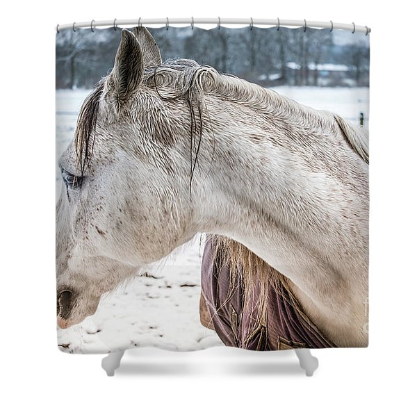 A Girlfriend Of The Horse Amigo Shower Curtain