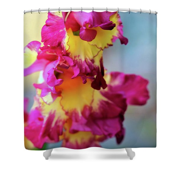 A Gladiolus 3 Shower Curtain