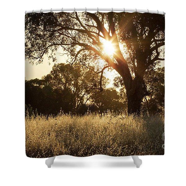A Golden Afternoon Shower Curtain