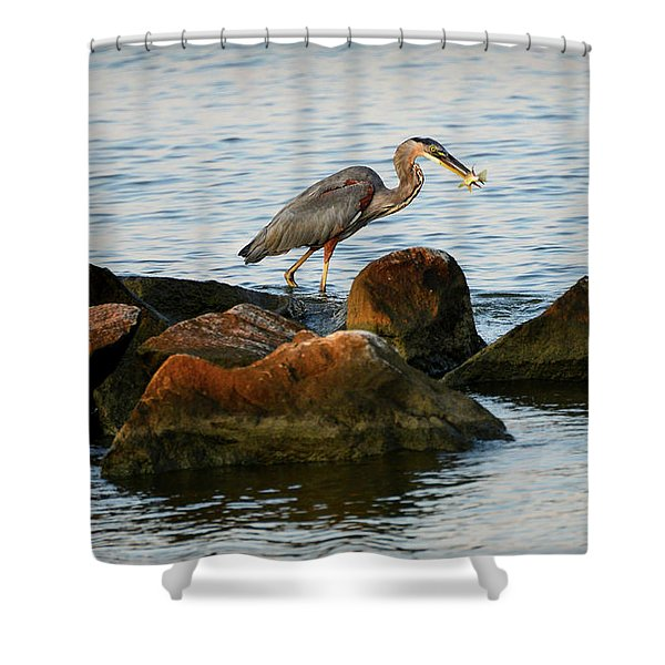 A Great Blue Heron Day Shower Curtain