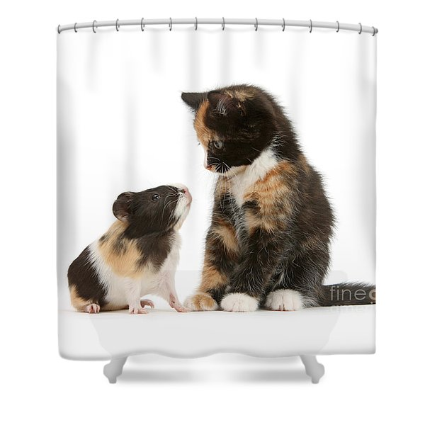 A Guinea For Your Thoughts Shower Curtain