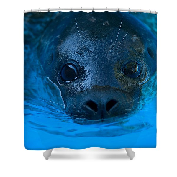 A Harbor Seal At The Lincoln Childrens Shower Curtain