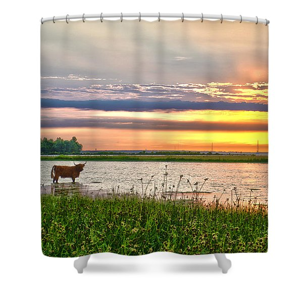 A Highland Cow In The Lowlands Shower Curtain