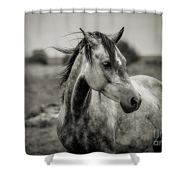 A Horse In Profile In Black And White Shower Curtain