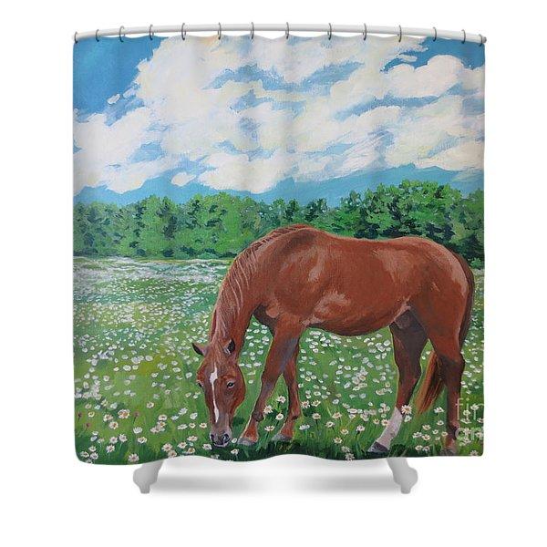 A Horse Named Dante Shower Curtain