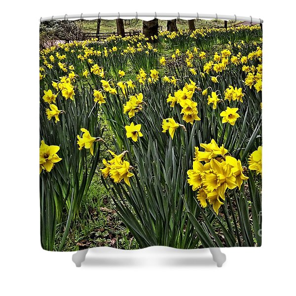 A Host Of Golden Daffodils Shower Curtain