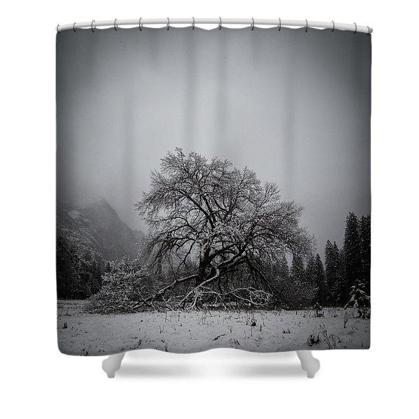 A Magic Tree Shower Curtain