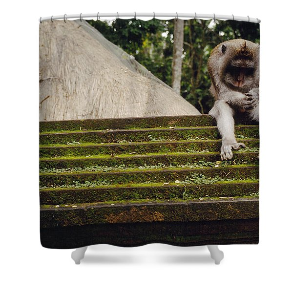 A Monkey Sits Contemplatively Shower Curtain
