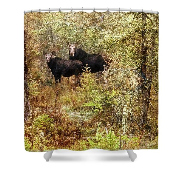 A Mother And Calf Moose. Shower Curtain