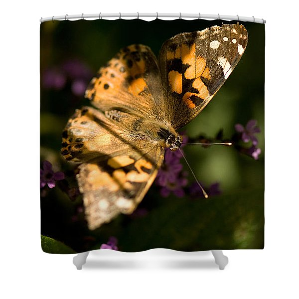 A Painted Lady Butterfly At The Lincoln Shower Curtain