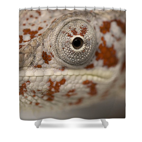 A Panther Chameleon At The Lincoln Shower Curtain