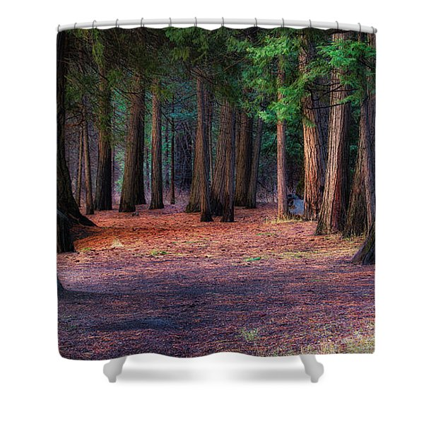 A Path Of Redwoods Shower Curtain