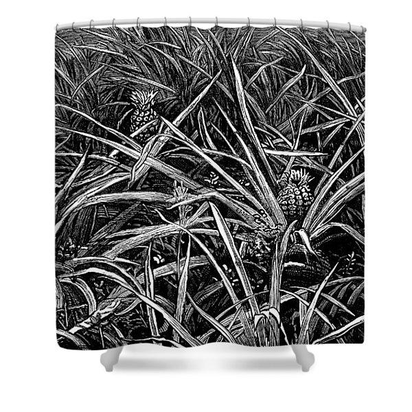 A Pineapple Field Near Nassau, Bahamas, 1883 Shower Curtain