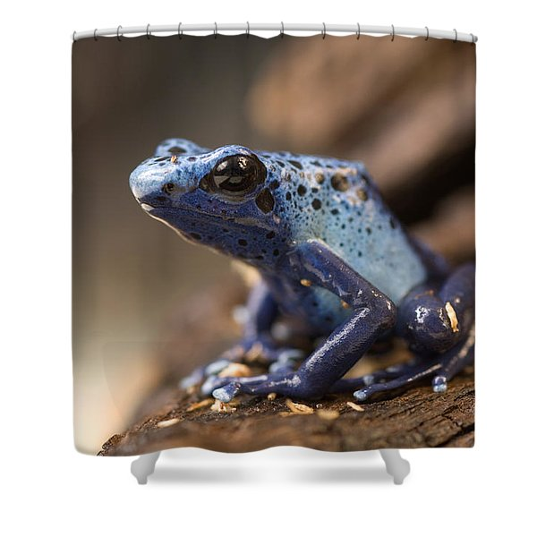 A Poison Dart Frog Dendrobates Azureus Shower Curtain