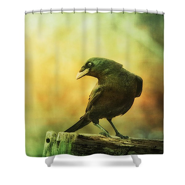 A Ravens Poise Shower Curtain