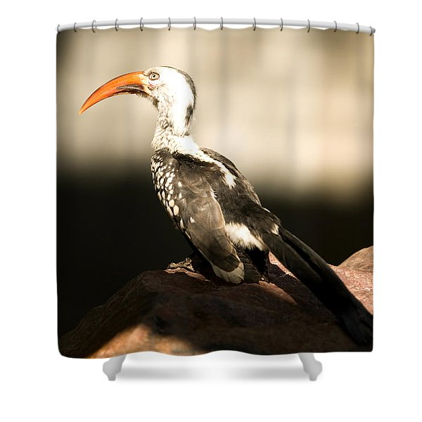 A Red-billed Hornbill At The Lincoln Shower Curtain