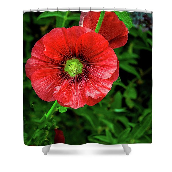 A Red Hollyhock Shower Curtain