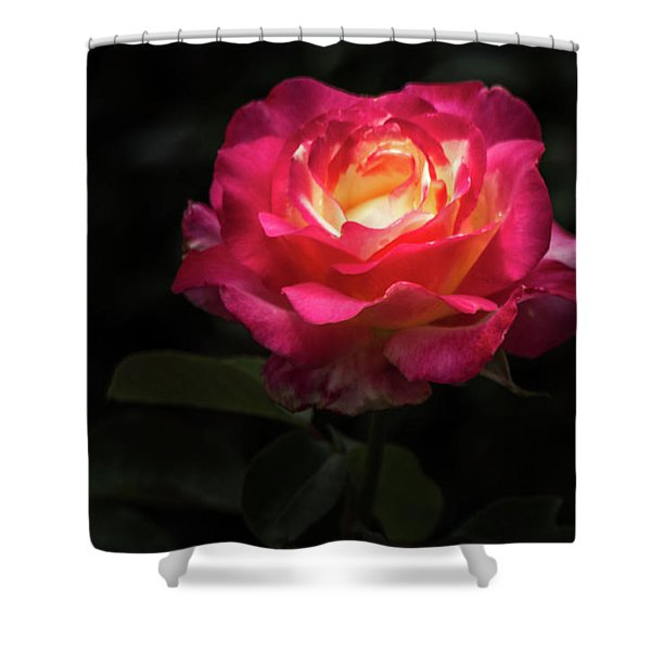 A Rose For Love Shower Curtain