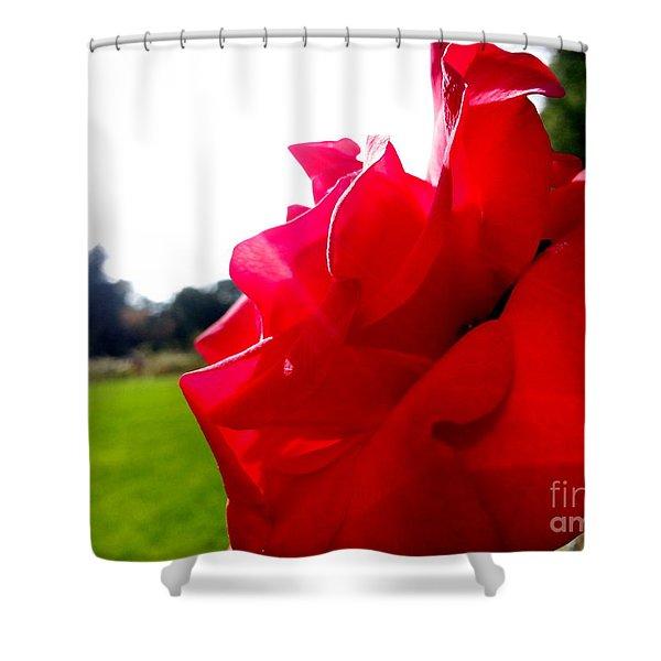 A Rose In The Sun Shower Curtain
