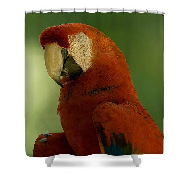 A Scarlet Macaw At The Lincoln Shower Curtain