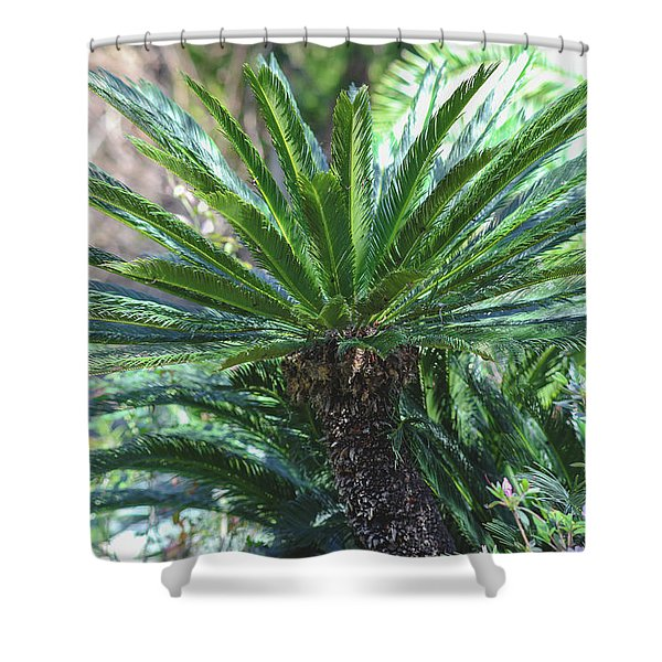 A Shady Palm Tree Shower Curtain